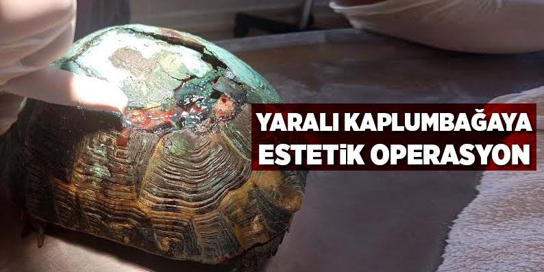 Yaralı kaplumbağaya estetik operasyon
